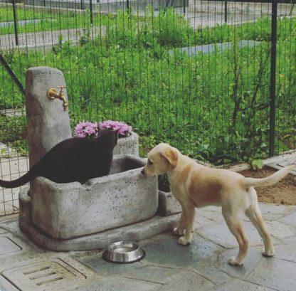 fontana Dolomiti 60 col. antichizzato, cod. 03FD60AT, in compagnia di Fonzy e Beky, località: Missaglia (Lecco)